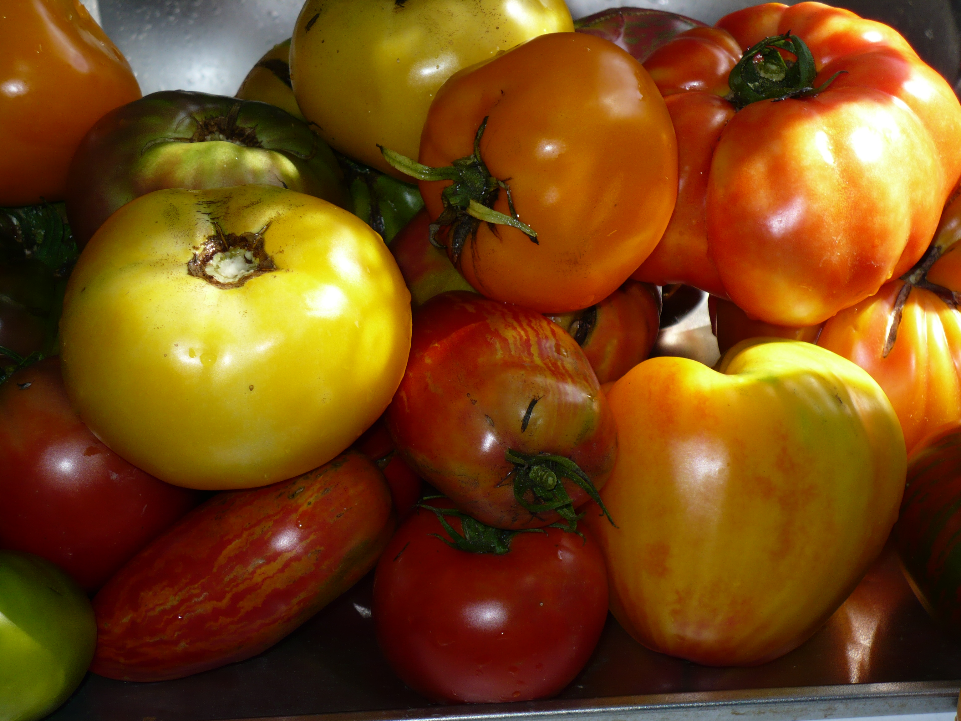 The First Time Gardener: Selecting Vegetable Varieties | The Demo ...