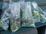 Bags of Salad