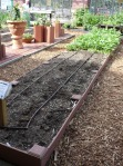 Fallow Pea Bed