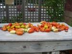 Roma Tomato Pile