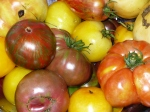 Tomatoes_034