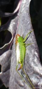 Crazy Grasshopper
