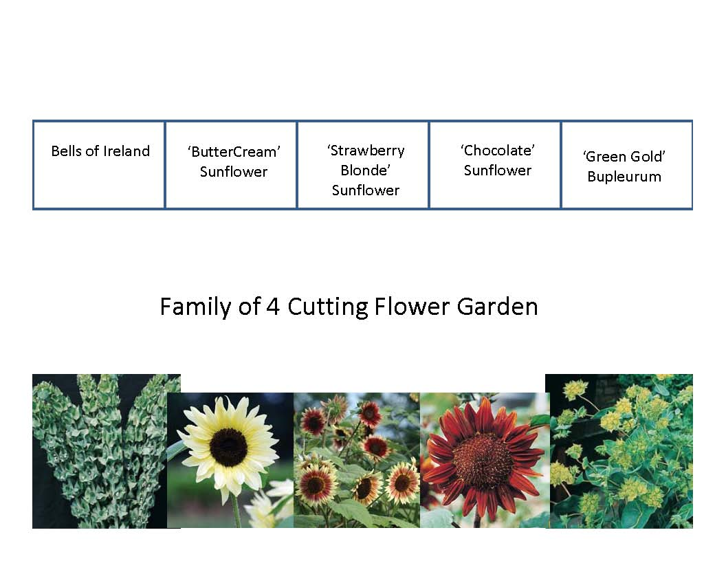 Cutting Garden Design Plans demo garden 2010 plans – cutting flowers | the demo garden blog