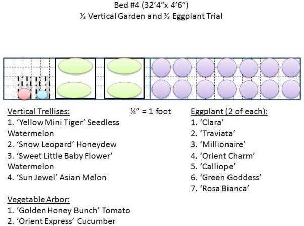 Vertical & Eggplant Garden
