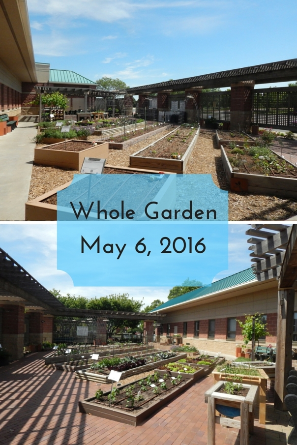 Whole GardenMay 6, 2016 (2)