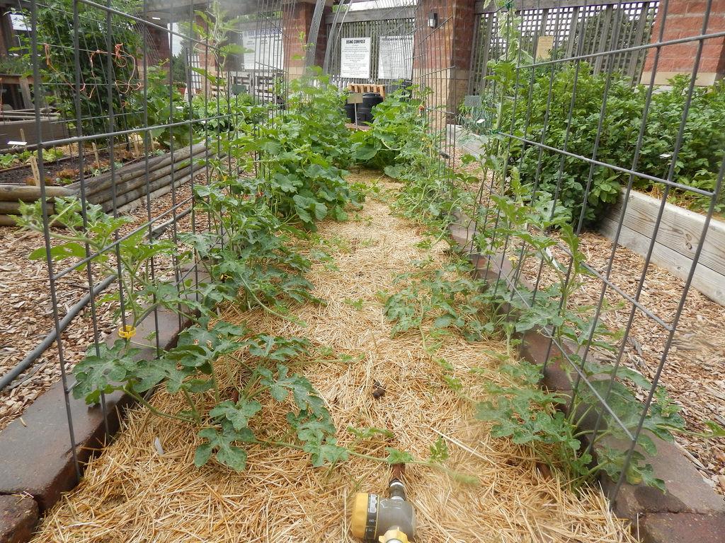 vertical garden the demo garden blog