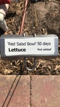 lettuce label
